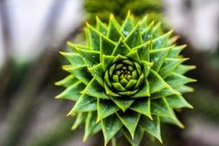 Planta verde macro em Padua imagem de stock