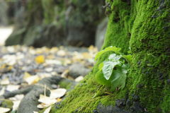 Planta verde na árvore Imagem de Stock