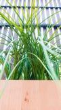 Planta verde na caixa de madeira Imagens de Stock