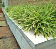 planta verde na frente da casa fotos de stock