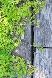 Planta verde na madeira Fotos de Stock Royalty Free