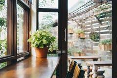 Planta verde na tabela, conceito da cafetaria, luz do dia da janela Imagem de Stock