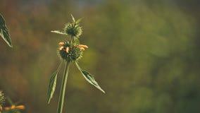 Planta verde natural Forest Environment fotografía de archivo libre de regalías