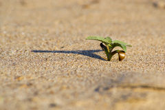 Planta verde no deserto Fotografia de Stock Royalty Free