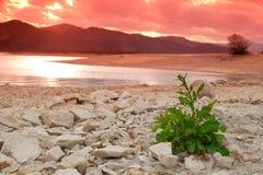 Planta verde no deserto Fotografia de Stock