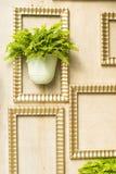 Planta verde no frame de madeira Fotos de Stock Royalty Free