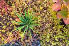 Planta verde no jardim do outono Foto de Stock