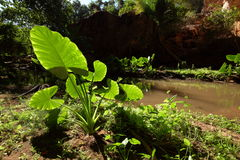 Planta verde no luminoso Imagem de Stock Royalty Free