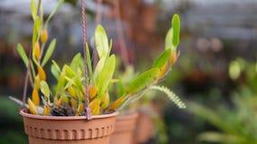 Planta verde no potenciômetro grande no jardim fotos de stock royalty free