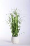 Planta verde no potenciômetro branco e no fundo branco Imagens de Stock