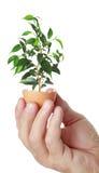 Planta verde nova em uma casca de ovo Imagens de Stock