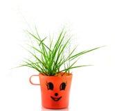 Planta verde nova isolada Foto de Stock