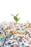 Planta verde nova na pilha de papel de sucata Foto de Stock