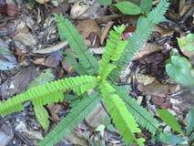 Planta verde pequena Foto de Stock Royalty Free