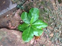 Planta verde pequena molhada com orvalho Imagem de Stock Royalty Free