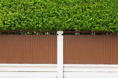 Planta verde pequena na parede da casa exterior Foto de Stock Royalty Free