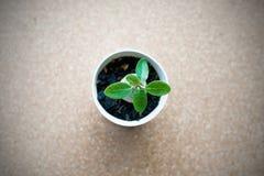 Planta verde pequena no potenciômetro no fundo da placa da cortiça Foto de Stock Royalty Free