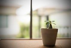 Planta verde pequena só no potenciômetro no fundo da placa da cortiça Foto de Stock Royalty Free