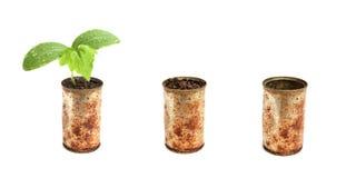 A planta verde pode dentro Fotografia de Stock