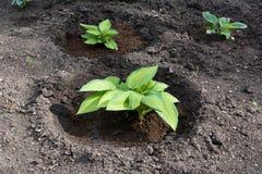 Planta verde que crece de suelo Foto de archivo libre de regalías