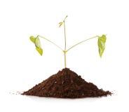 Planta verde que crece de una pila de suelo Foto de archivo