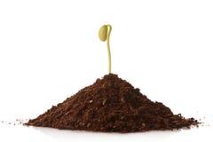 Planta verde que crece de una pila de suelo Fotos de archivo