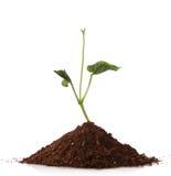 Planta verde que crece de una pila de suelo Imagen de archivo libre de regalías
