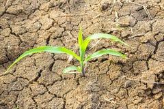 Planta verde que crece en la tierra muerta seca del suelo en desierto Imagen de archivo libre de regalías