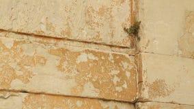 Planta verde que cresce através da parede de pedra, vida nova Negócio start-up fundando video estoque