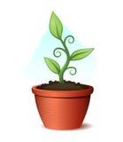 Planta verde que cresce do potenciômetro e do solo Fotografia de Stock