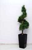 Planta verde que tuerce en espiral Fotografía de archivo