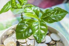 A planta verde sae em um fundo do dinheiro Fotos de Stock