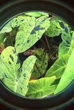 Planta verde a través del ojo de pescado de s Imagenes de archivo