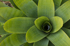 Planta verde y amarilla Fotografía de archivo