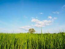 Planta verde y cielo azul Foto de archivo libre de regalías
