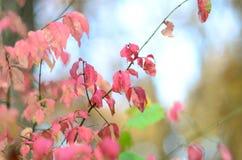 Planta vermelha Fotos de Stock Royalty Free