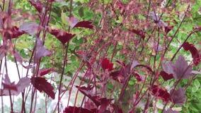 Planta vermelha com abelhas filme