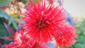 Planta vermelha estranha com pontos fotografia de stock
