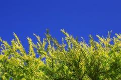 Planta y cielo Fotos de archivo