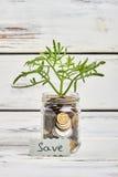 Planta y dinero en la madera fotografía de archivo