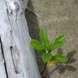 Planta y driftwood Imagen de archivo