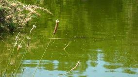 Planta y el lago verde almacen de metraje de vídeo