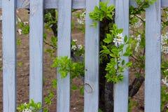 Planta y Gray Wooden Fence florecientes Naturaleza, concepto que cultiva un huerto Fondo de la naturaleza fotografía de archivo