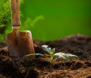 Planta y herramienta que cultiva un huerto contra fondo hermoso de la falta de definición en GR Fotos de archivo