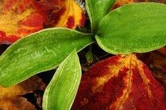 Planta y hojas Foto de archivo libre de regalías