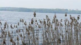 Planta y lago Fotografía de archivo libre de regalías