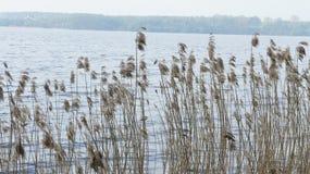 Planta y lago Imágenes de archivo libres de regalías
