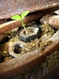 planta y metal corroído fotos de archivo libres de regalías