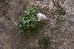 Planta y piedra Fotos de archivo