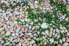Planta y piedra imagenes de archivo